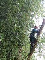 Dichtes Bambusgewächs ist auch kein Problem