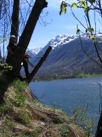 Fällung eines gefährlichen Baumes mit Klettertechnik, oben an einem steilen Felswand