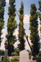 Fällung eines zum Teil umgestürzten Trockenholzes, mit verstärktem Objektschut