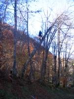 Fällen eines schief gewordenen gefährlichen Baumes