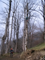 Fällen eines vom Sturm schief gestellten Baumes