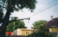 Sturmschaden Beseitigung, Abbau eines Baumes, der auf eine Leitung gestürzt ist, mittels Klettertechnik