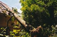 Fällen eines vom Sturm auf ein Hausdach gestürzten Baumes