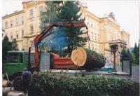 Abtransport von Rundholz und Ast